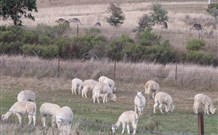 Glendalough Alpacas Bed and Breakfast