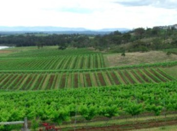 Hunter Vineyard Tours