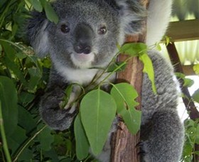 Koala Care Centre in Lismore