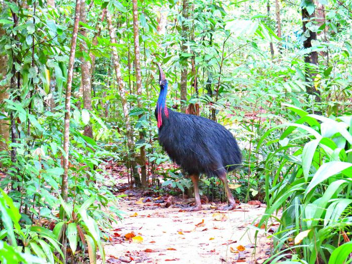 Daintree Safaris