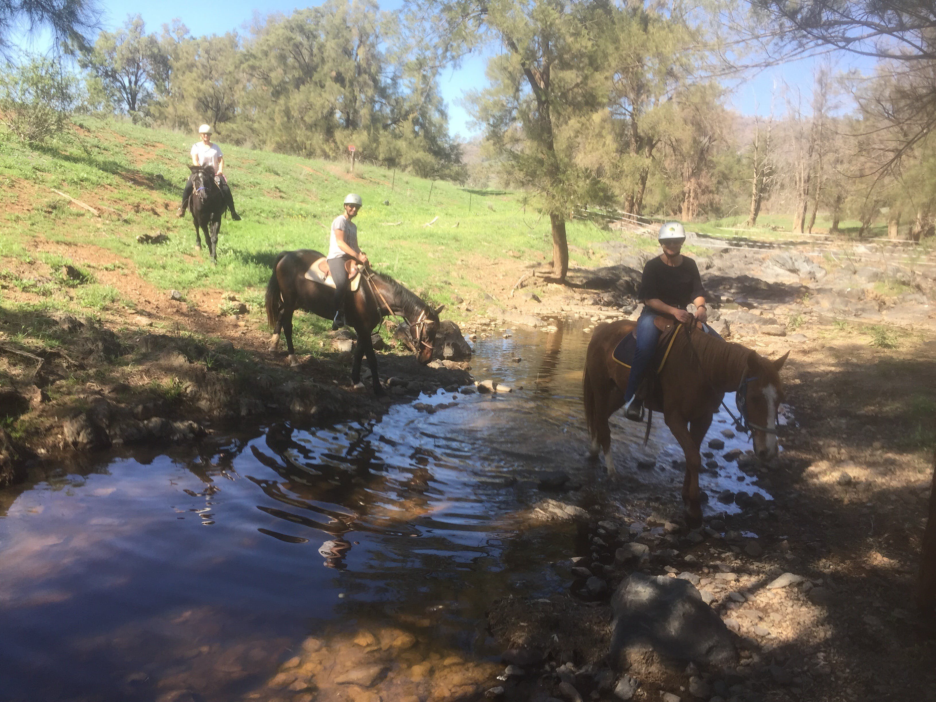 Tamworth and Kootingal Horse Riding Adventures