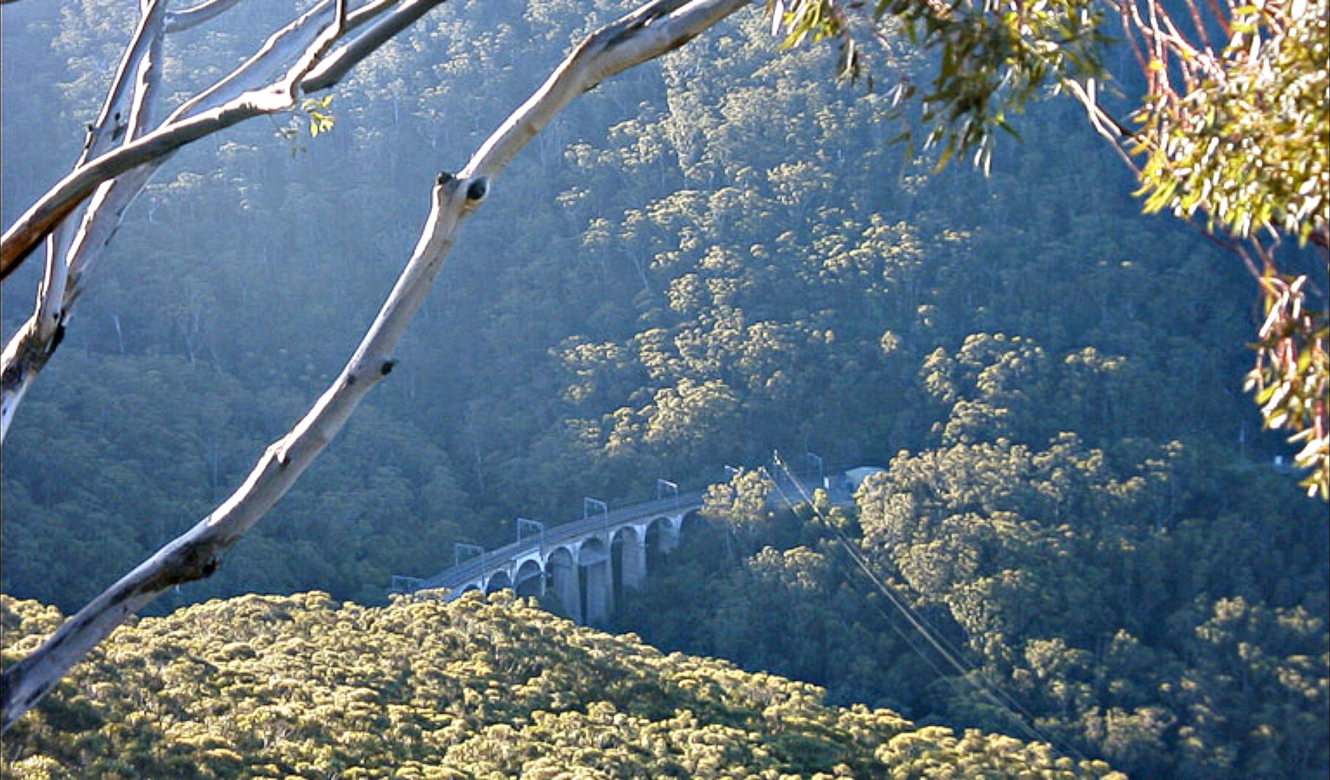 Forest Walk to Sublime Point Track